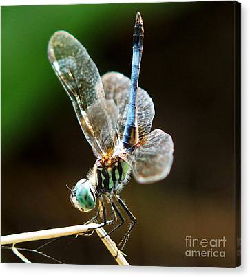 Dragonfly Headstand Canvas Print