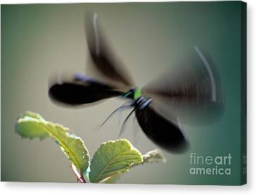 Dragonfly In Flight Canvas Print by George Atsametakis