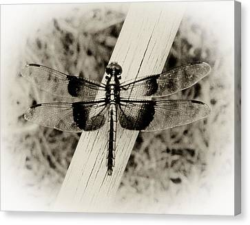 Dragonfly In Sepia Canvas Print by Tony Grider