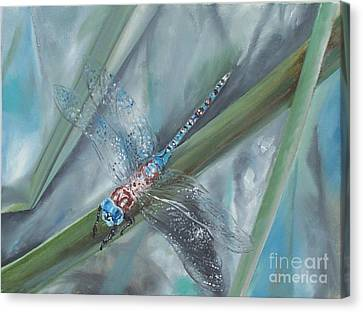Dragonfly Canvas Print by Irene Pomirchy