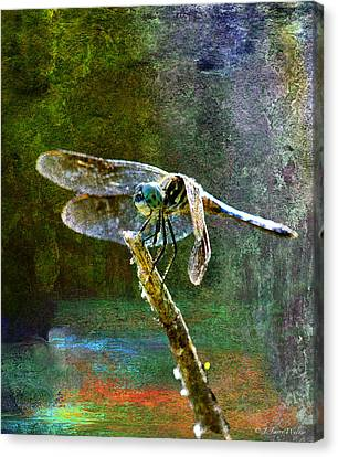 Dragonfly  Canvas Print by J Larry Walker