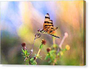 Dragonfly Canvas Print by Jonathan Gewirtz