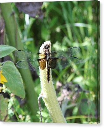 Canvas Print featuring the photograph Dragonfly by Karen Silvestri