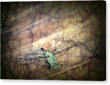 Dragonfly Leap Of Faith Canvas Print by Dawna Morton