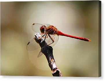 Dragonfly Light Canvas Print