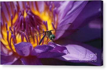 Blending Canvas Print - Dragonfly Looking At You...   # by Rob Luzier
