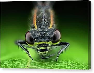Dragonfly On A Leaf Canvas Print by Frank Fox