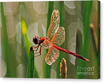 Dragonfly Profile Canvas Print