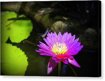 Canvas Print featuring the photograph Dragonfly Resting by Laurie Perry