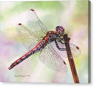 Dragonfly  Canvas Print by Sarah Stribbling
