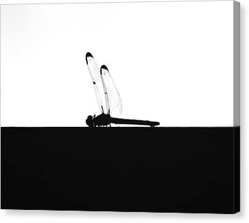 Dragonfly Silhouette Canvas Print by Maggy Marsh