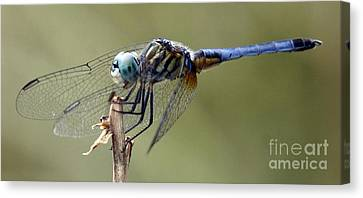Dragonfly Smile Canvas Print
