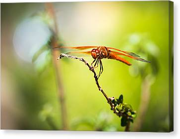 Canvas Print featuring the photograph Dragonfly Smile by Priya Ghose