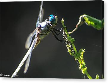 Dragonfly Taking A Rest  Canvas Print by Steven  Taylor