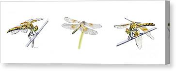 Dragonfly Trilogy Canvas Print