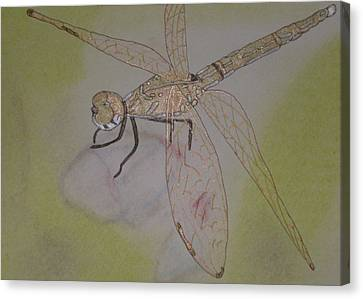 Dragonfly Visitor Canvas Print by Marcia Weller-Wenbert