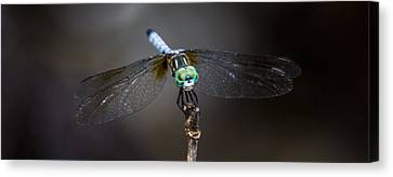Canvas Print featuring the photograph Dragonfly Wings by Paula Porterfield-Izzo