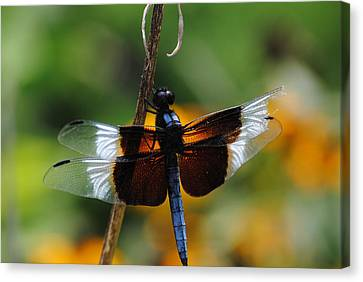 Canvas Print featuring the photograph Dragonfly Zoom by Robert  Moss