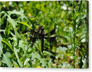 Canvas Print featuring the photograph Dragonflyongreenery by Robert  Moss