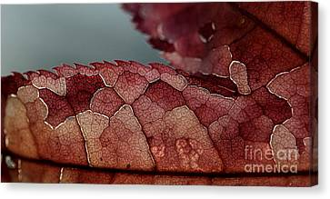 Canvas Print featuring the photograph Dragon's Spine by Kenny Glotfelty