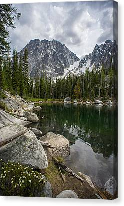 Alpine Canvas Print - Dragontail Forest Scene by Mike Reid