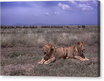 Canvas Print featuring the photograph Drama On The Serengeti by Gary Hall
