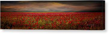Drama Over The Flower Fields Canvas Print by Angela A Stanton