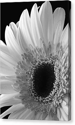 Canvas Print featuring the photograph Dramatic Beauty by Dawn Currie