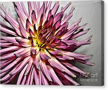 Dramatic closeup of pink dahlia watercolor effect photograph by valerie garner - Valerie garnering ...