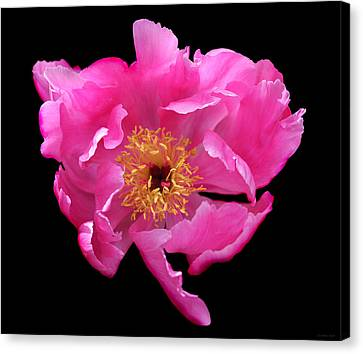 Dramatic Hot Pink Peony Flower Canvas Print by Jennie Marie Schell