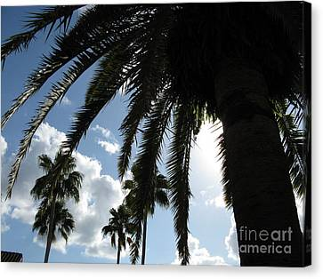 Canvas Print featuring the photograph Dramatic Palm by Jeanne Forsythe