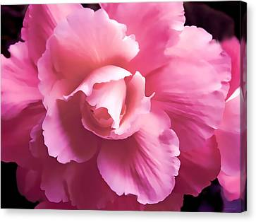 Dramatic Pink Begonia Floral Canvas Print by Jennie Marie Schell