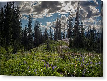 Dramatic Rainier Flower Meadows Canvas Print by Mike Reid