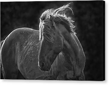 Dramatic Wild Mustang Canvas Print