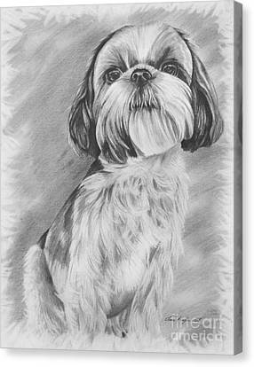 Drawing Of A Shih Tzu Canvas Print by Lena Auxier