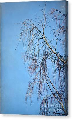 Dream Blue Canvas Print by Evelina Kremsdorf