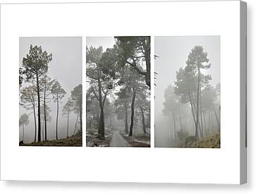 Dream Forests Triptych Canvas Print by Guido Montanes Castillo