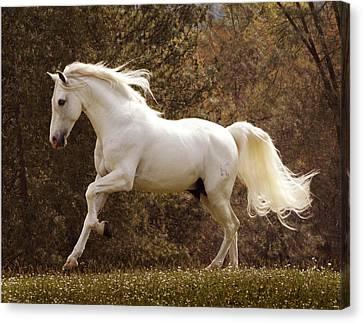 Dream Horse Canvas Print