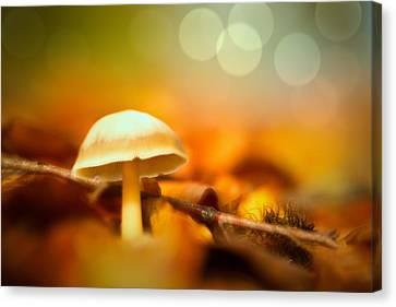 Dream Mushroom Canvas Print by Dirk Ercken