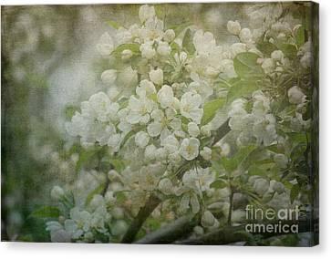 Dream Of Spring Canvas Print by Arlene Carmel