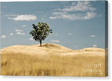 Dream Tree Canvas Print by Scott Pellegrin