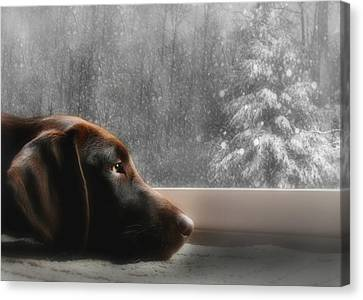 Labradors Canvas Print - Dreamin' Of A White Christmas by Lori Deiter