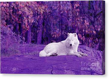 Dreaming Of Another World Canvas Print by Vicki Spindler