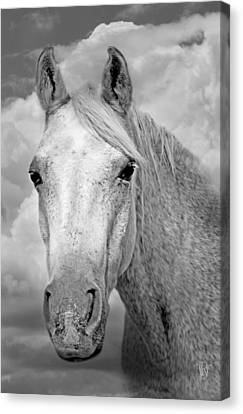 Dreaming Of Freedom Canvas Print by Renee Forth-Fukumoto