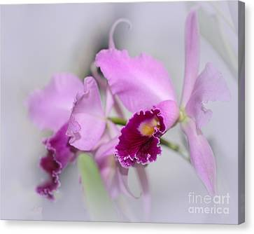 Dreaming Of Orchids Canvas Print