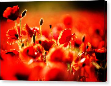 Canvas Print featuring the photograph Dreaming Of Poppies by Meirion Matthias