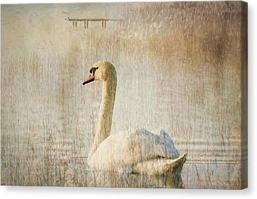 Songs Of A Swan Canvas Print by Georgiana Romanovna