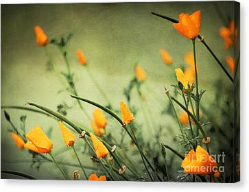 Canvas Print featuring the photograph Dreaming Of Spring by Ellen Cotton