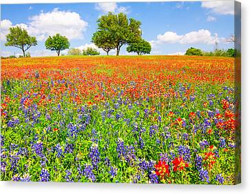 Dreaming Of Wildflowers Canvas Print