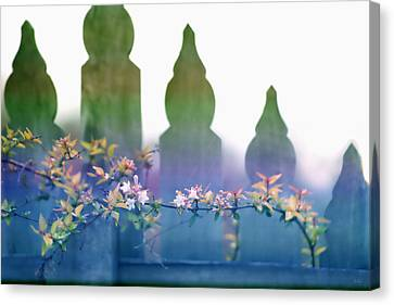 Canvas Print featuring the photograph Dreams Of A Picket Fence by Holly Kempe